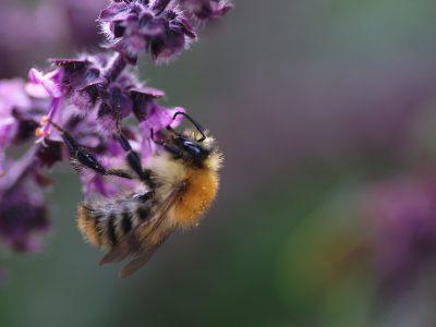 Glastir Landscape and Pollinators Small Grants