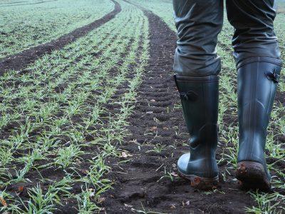 Farming - LHP Accountants